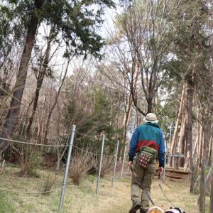 桜の森散歩