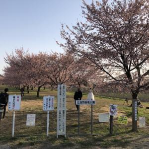 北浅羽桜堤公園散歩