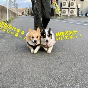 桜散歩@阿須運動公園