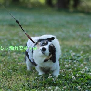 智光山公園でバラを見ながらお散歩♪
