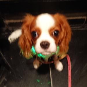 DOGdog展に行ってまいりました②
