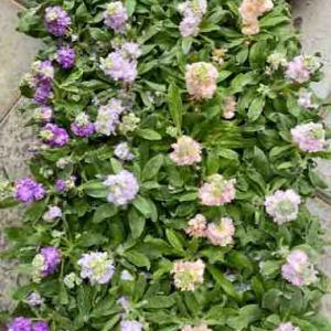 寒さに強いお花達