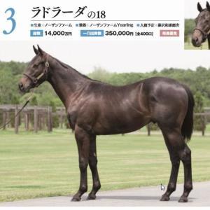 【キャロットクラブ2019年度募集馬】 出資馬検討