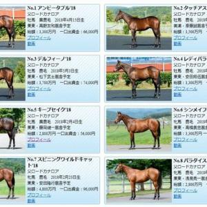 【ロードTO2019年度募集馬】画像・動画公開!!