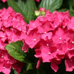 今日の 美咲花山公園 の様子