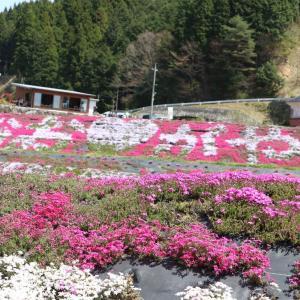 西粟倉村・芝桜と温泉の日帰り旅