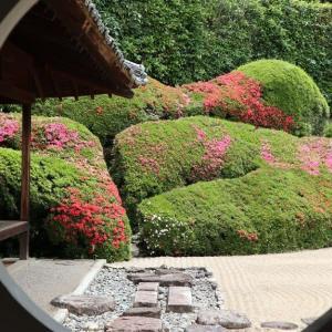 頼久寺庭園見学