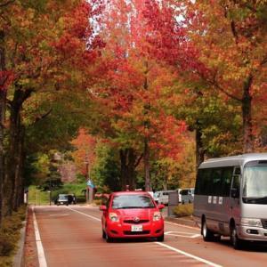金沢に紅葉シーズン到来