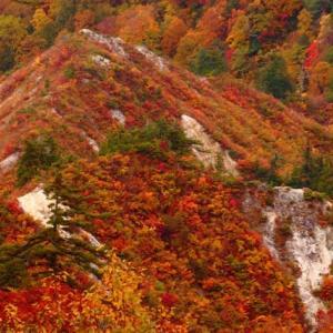 ブナ原生林の圧倒的な紅葉