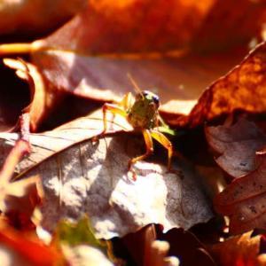 犀鶴林道に見る秋
