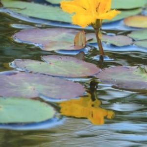 河北潟干拓地で見る水辺の花