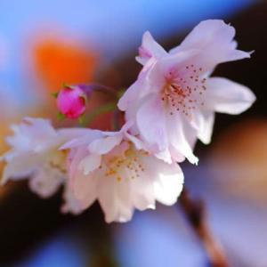 卯辰山 晩秋の花