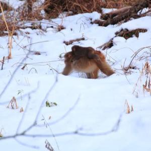 一里野で雪景色