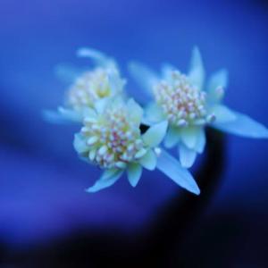 山里 早春の花