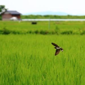 飛ぶ鳥を撮る