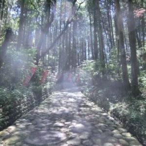 金谷坂の石畳 (東海道歩き旅・遠江の国)