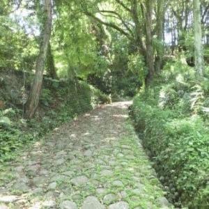 牧ノ原台地の茶畑 (東海道歩き旅・遠江の国)