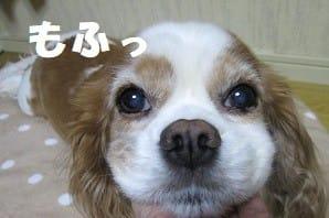 紗栄子が17歳未成年と交際・淫行報道&チワワ・トイプー109匹多頭飼い崩壊