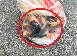 変態女とジッちゃん&ごみステーションにゴミ袋に生後間もない赤ちゃん猫4匹