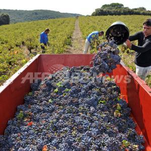 フランスは過去最低のワイン生産を記録しそうだ