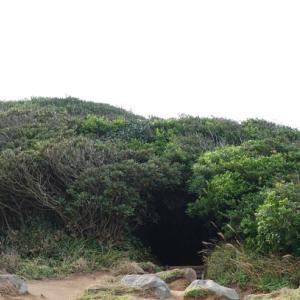 九州旅行③糸島オフ会「トトロの森」~♪♪
