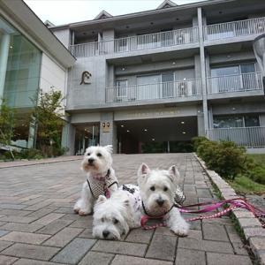WPの後は「ホテル凛香富士山中湖リゾート」~♪♪
