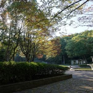 公園お散歩っぽ🐾&「イーハトーブソラ」さんでランチ~♪♪