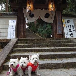 厄除霊場「松尾寺」さんへお詣りに~♪♪