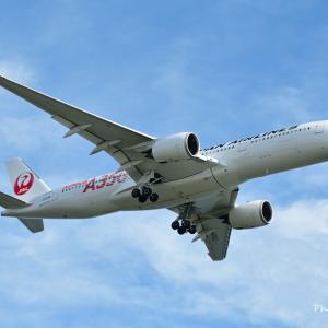 遂にご対面、JALの初号機Airbus A350-900、そして癒しの世界-苔