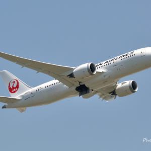 もう少し色味が欲しいJALの飛行機--Boeing787-8、そして近所の染井吉野です。