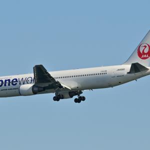 日本航空ワンワールド仕様のBoeing767-300ERが川崎沖をファイナルアプローチ、そして私が育てているカモジゴケ