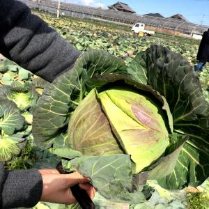 射手矢農園収穫祭〜松波キャベツとエディブルフラワーのしらべ