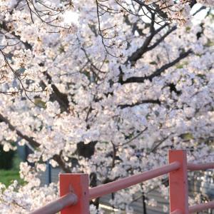 癒される桜♪娘作のパスタと風の森