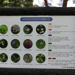 山の日、徳島県の黒沢湿原と高知県の梶ケ森へ