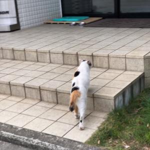 朝から両手に猫