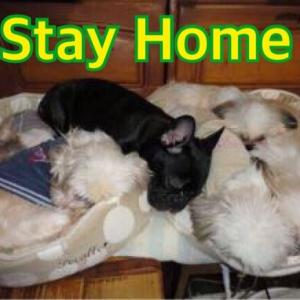 Stay Home【4/9】