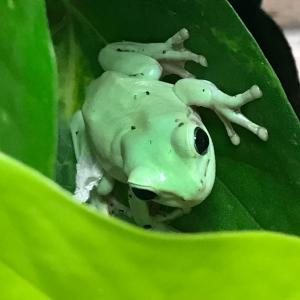 蛙🐸フェチ💕【7/31】