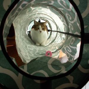 トンネル、やっと交換した(^・o・^)ニャ