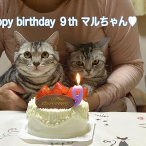 マルちゃん9歳誕生日!