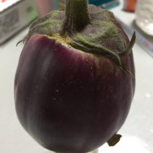 巨大な茄子が採れました。