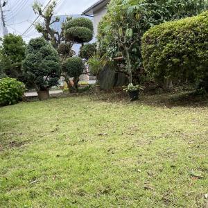 庭の枝下しをしました。