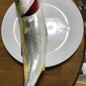 新鮮お魚を捌く