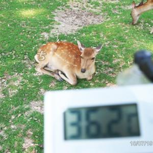 鹿スナップ集 vol.220 毎日暑すぎるので温度計を持って行った