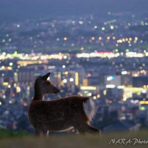 鹿スナップ集 vol.222 夜景と鹿