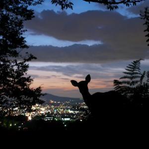 鹿シルエット vol.109 夜景と鹿