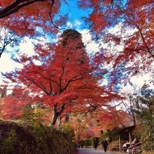 大人の秋旅行