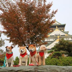 犬連れ帰省旅行2019(旅籠屋 & 大阪城)