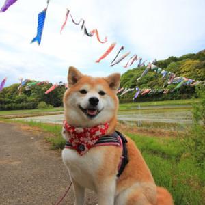 GW犬連れ旅行2019その2(橘ふれあい公園・・THE FARMコテージ)