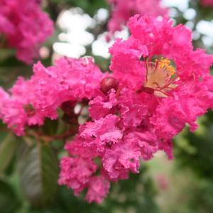 秋の庭と花の色、ピンクはバラ・桃・ナデシコの色