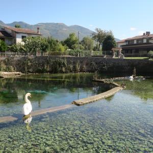清らかな水と白鳥とああ罰金、リエーティ 聖スザンナの泉